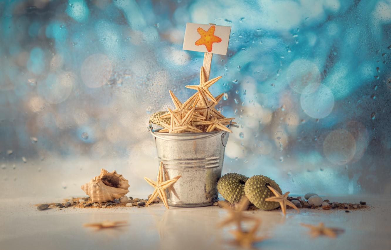 Фото обои вода, капли, табличка, ракушки, боке, морские звёзды, ведёрко