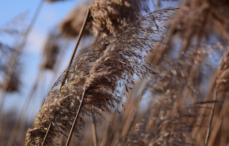 Фото обои зима, трава, ветер, боке