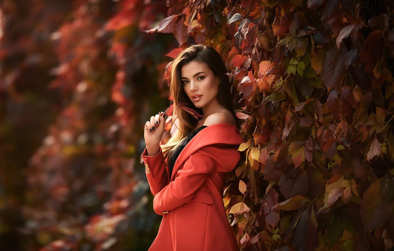 Фото обои осень, взгляд, листья, волосы, Девушка, плечо, пальто, Анастасия Бармина