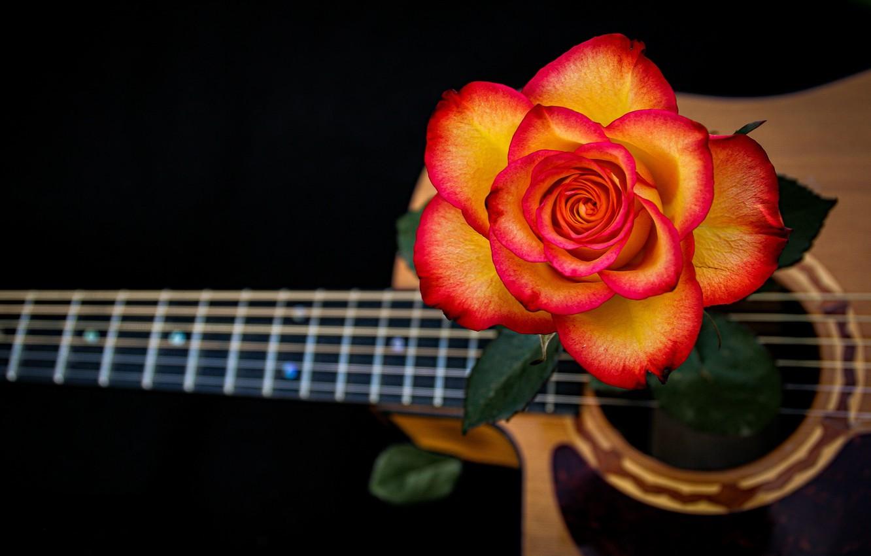 Фото обои роза, гитара, струны