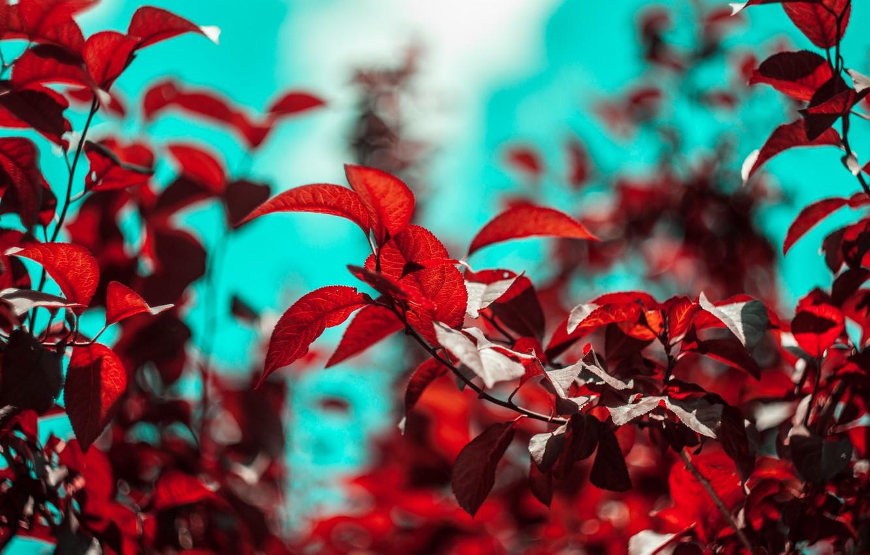 Фото обои листья, деревья, боке