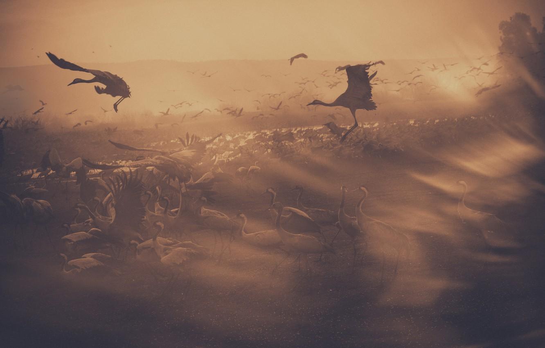 Фото обои полет, flight, журавли, cranes, keren or