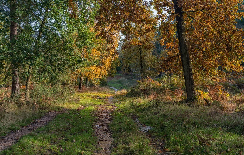 Фото обои дорога, осень, лес, деревья, Англия, Stratford-on-Avon District