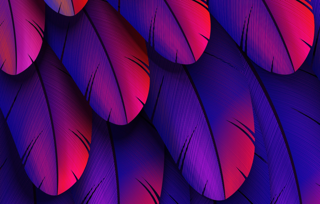 Фото обои colorful, feather, abstract 3D
