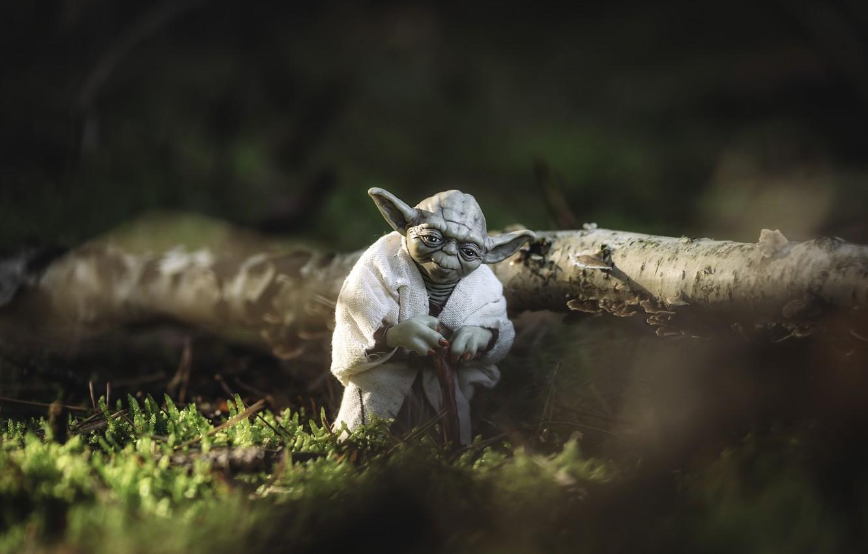 Фото обои природа, фантастика, бревно, Звёздные войны, джедай, Йода, персонаж