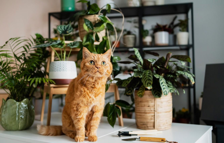 Фото обои кошка, кот, цветы, рыжий, котейка