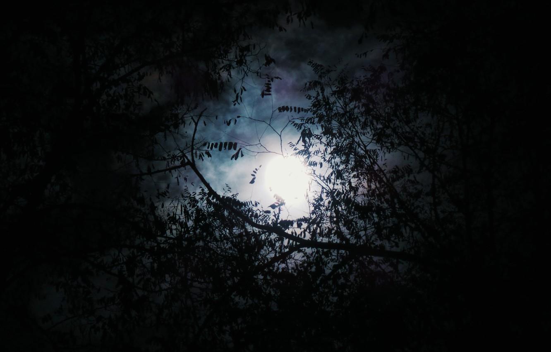 Фото обои лес, небо, деревья, ночь, природа, полнолуние, кроны