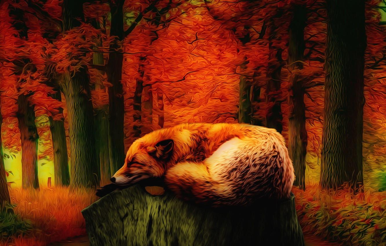 Фото обои природа, усталость, красота, сказка, лиса, осенний лес, фЭнтези арт, красная листва деревьев, лис спящий на …