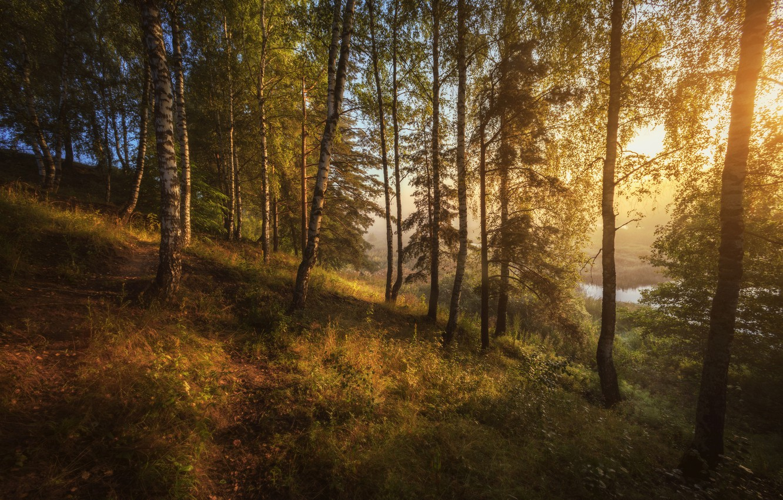 Фото обои лес, деревья, пейзаж, природа, туман, озеро, утро, склон, тропинка, Николай Шевченко