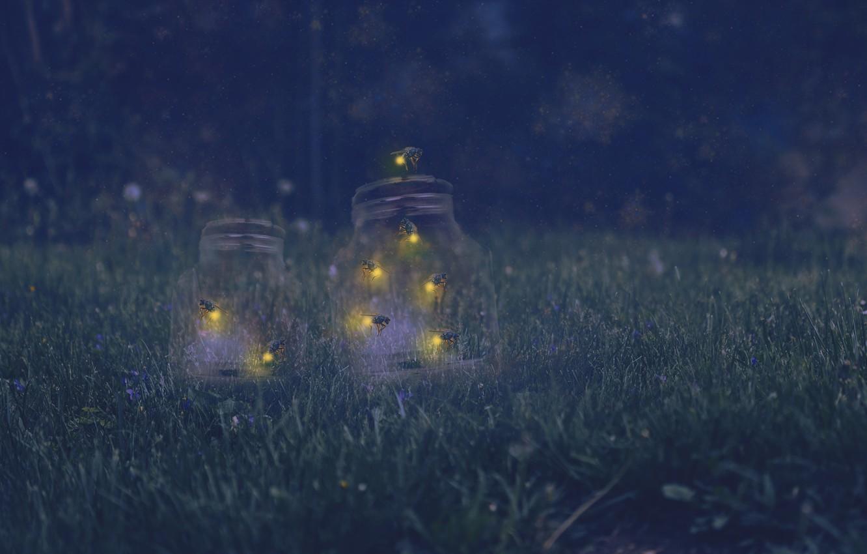 кожаный картинки светлячки в банке на траве ваш