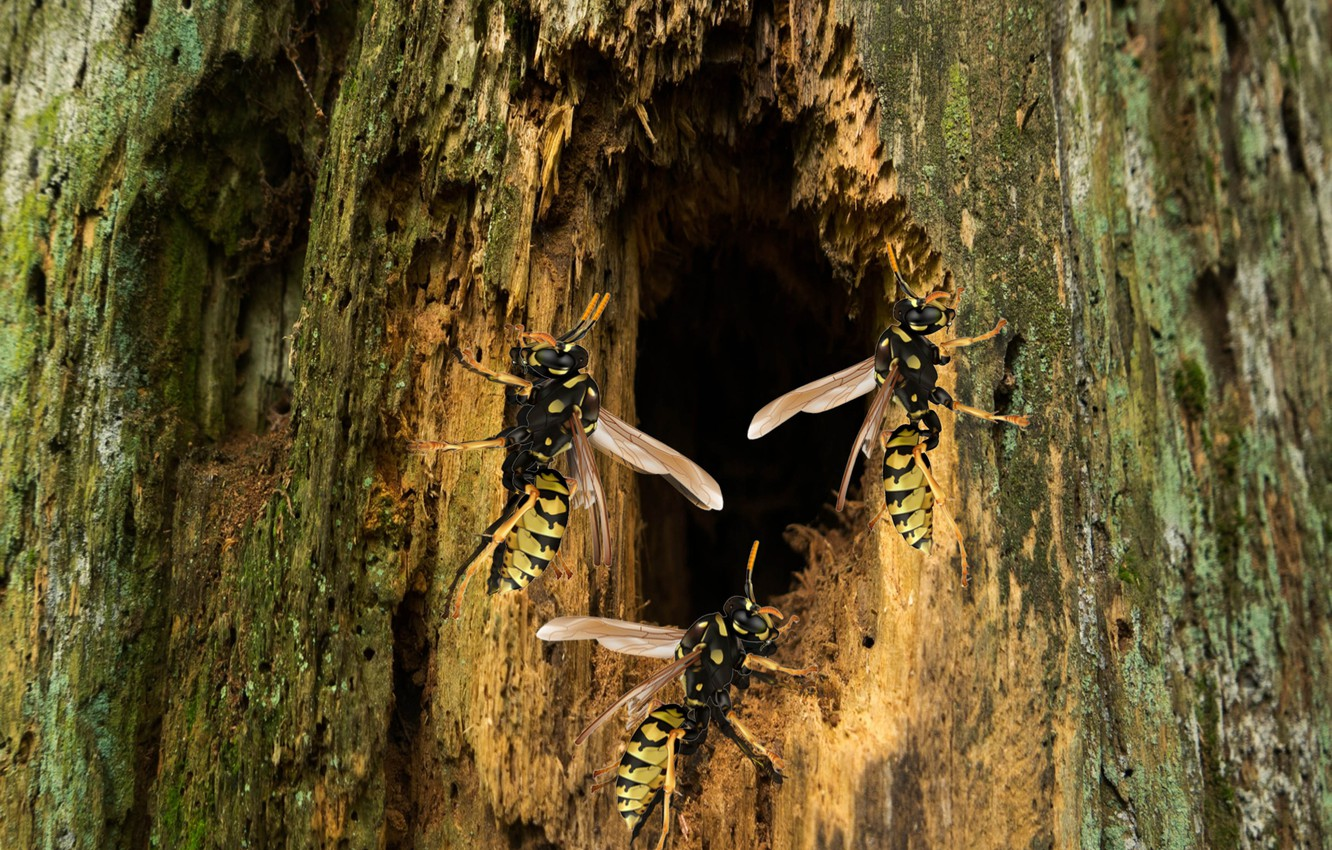 Фото обои forest, nature, insect, Wasp, Log