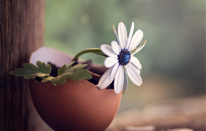 Фото обои цветок, макро, скорлупа, деревяшки
