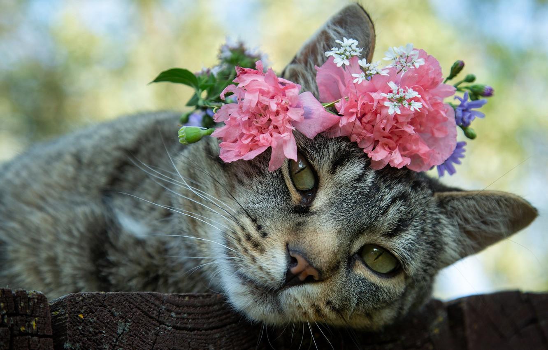 фото котики с цветами