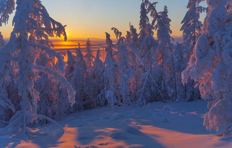 Фото обои зима, снег, деревья, пейзаж, закат, природа, ели, тени, Якутия, Владимир Рябков