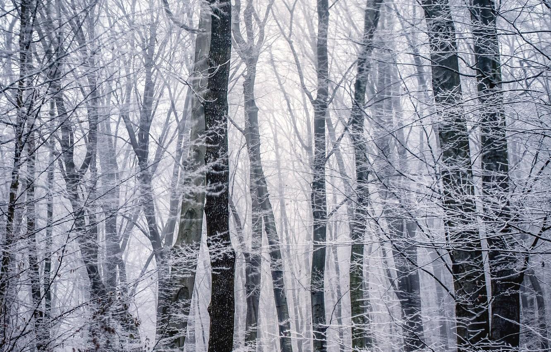 Фото обои зима, иней, лес, деревья, ветки