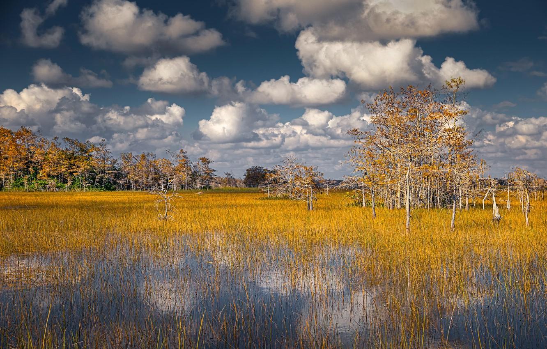 Фото обои USA, Clouds, Florida, Big Cypress National Preserve
