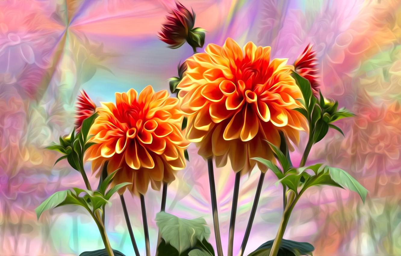 Обои стебель, цветок, оранжевая, Георгина, цветы. Цветы foto 10
