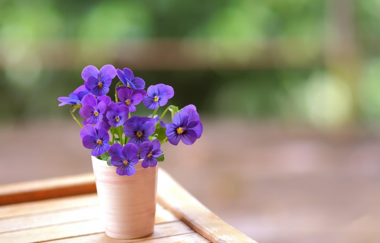 Фото обои цветы, фон, горшок
