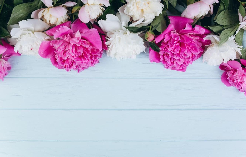 Обои цветы, блюдце, пионы. Разное foto 11