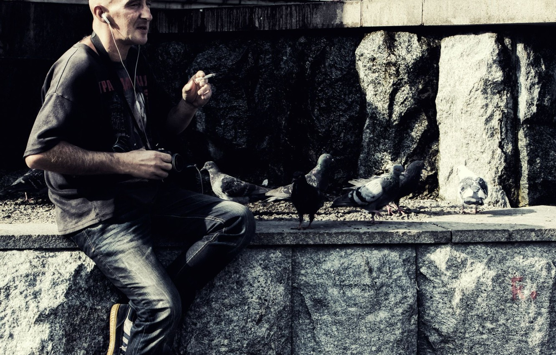 Фото обои птицы, Камень, голуби, Фотограф