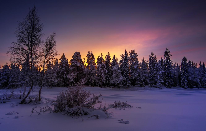 noch zima les - Мистические истории из жизни: как Леший ребенка увел