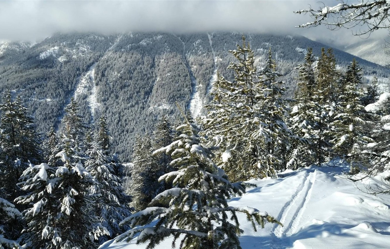 Фото обои зима, лес, следы, ёлки