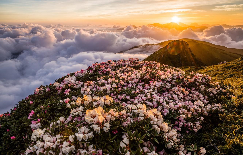 изначально цветущие горы фото ускорение пригодится для