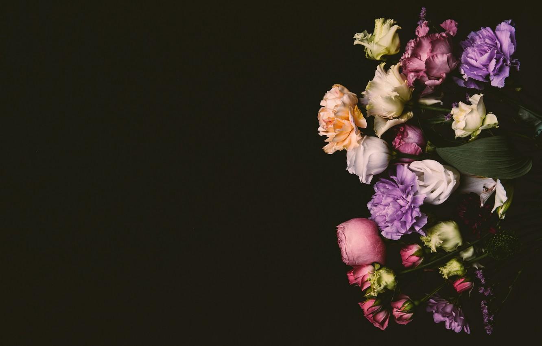 Фото обои цветы, розы, colorful, розовые, черный фон, black, pink, flowers, background, сиреневые, roses, violet, гвоздики