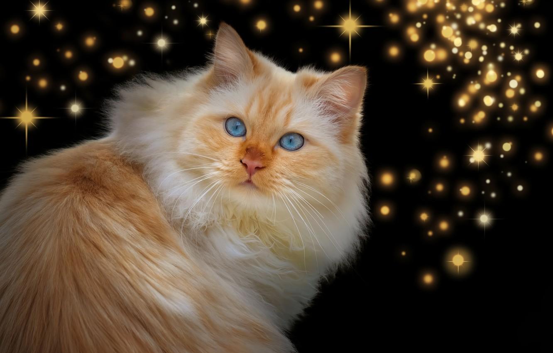 Фото обои кот, взгляд, рыжий, звёздочки, тёмный фон