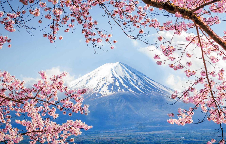 обои на телефон япония природа выкладываем фасоль, после