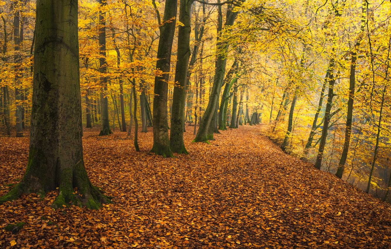 Фото обои осень, деревья, парк, река, Германия, опавшая листва