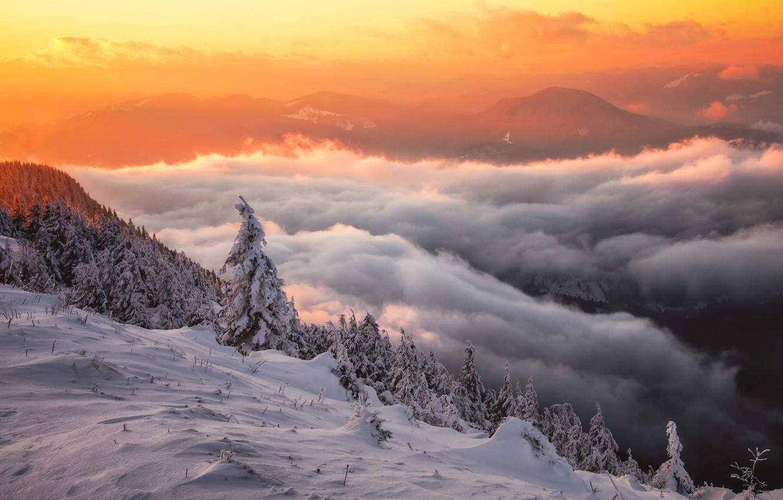 Фото обои зима, облака, снег, деревья, пейзаж, закат, горы, природа, ели, склон, леса