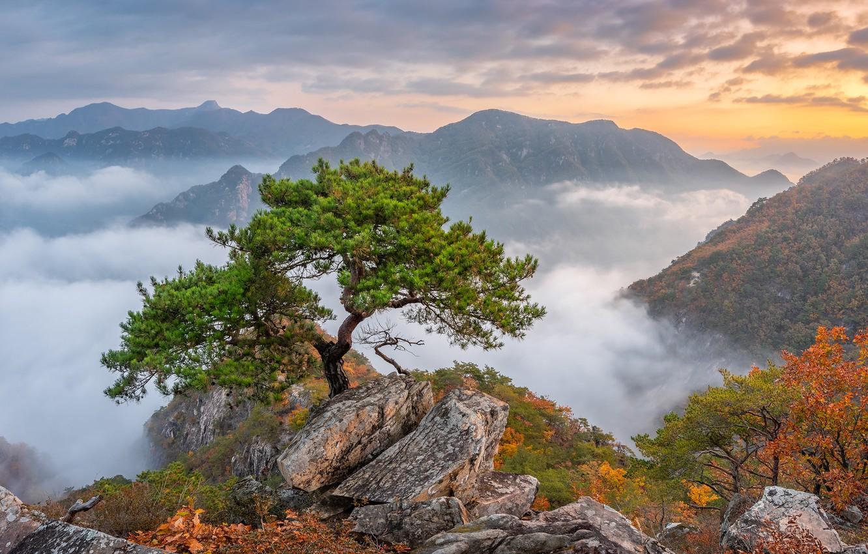 Фото обои осень, деревья, горы, South Korea, сосна, Южная Корея, Bukhansan National Park, Национальный парк Пукхансан
