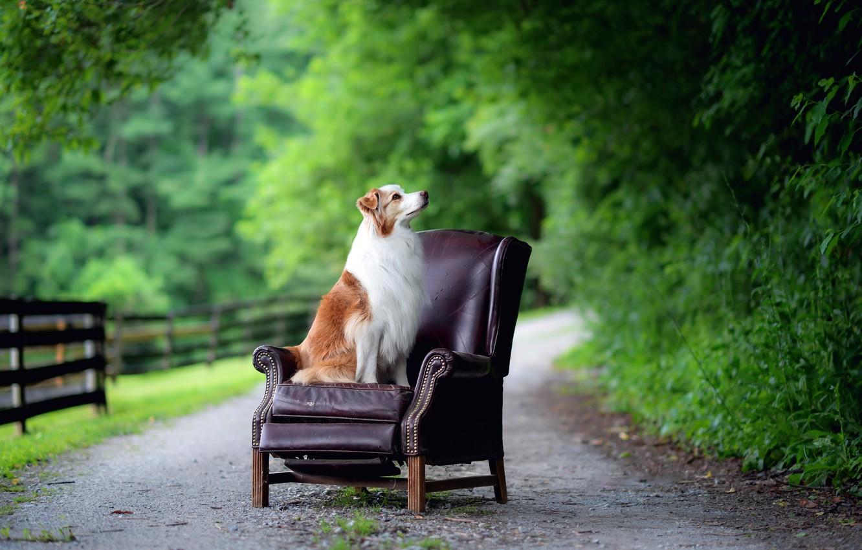 Фото обои дорога, собака, кресло