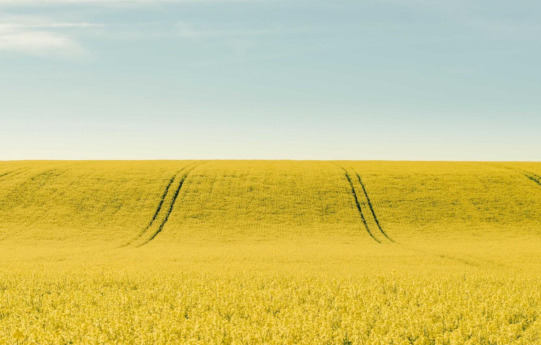 Фото обои поле, небо, рапс