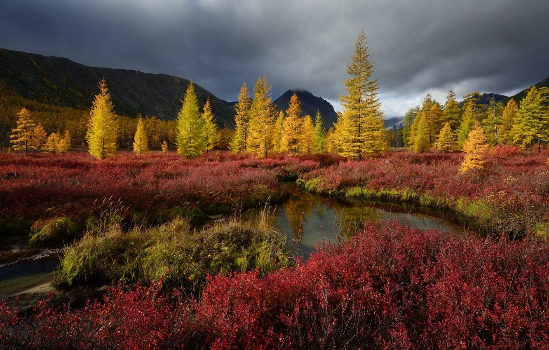 Фото обои осень, природа, Деревья, Колыма, ручей Неведомый, Максим Евдокимов
