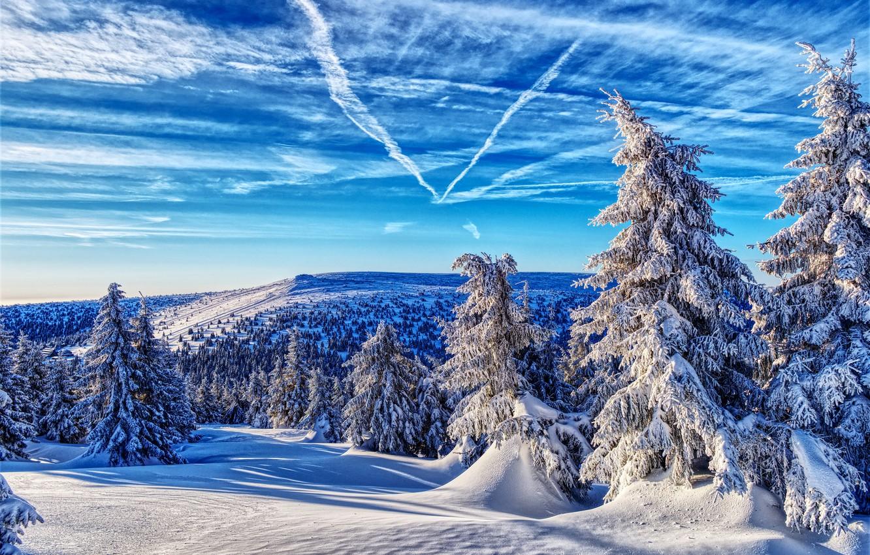 Фото обои зима, лес, небо, снег, ели, Чехия, Czech Republic, Jeseníky Mountains, Горы Есеники