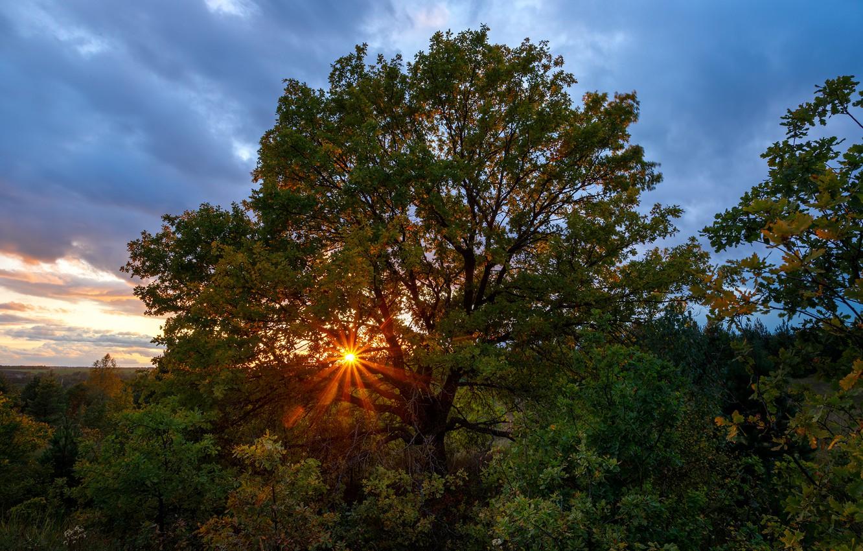 Фото обои осень, солнце, лучи, деревья, закат, природа, растительность