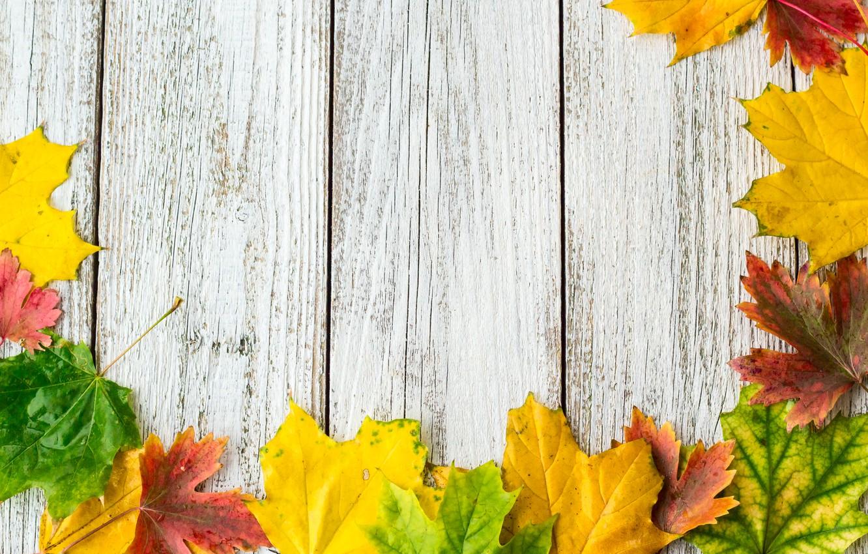 Фото обои осень, листья, фон, colorful, rainbow, клен, wood, autumn, leaves, maple