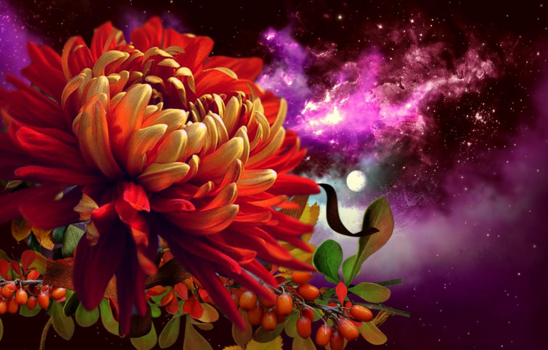 Фото обои цветок, вселенная, звёзды, астра, нкбо