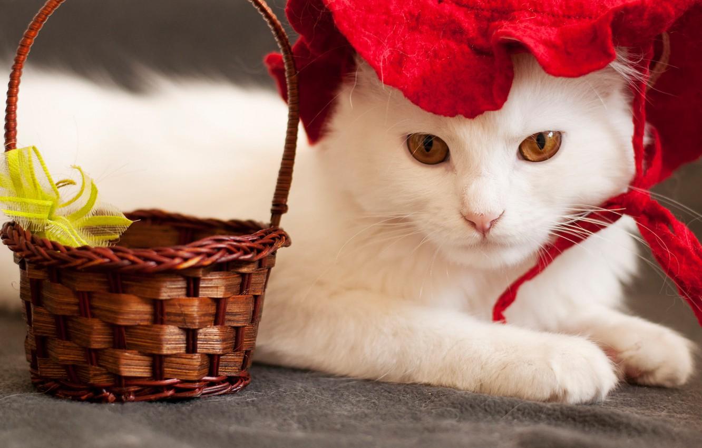 Обои шляпка, Кошка, кот. Кошки foto 7