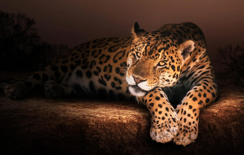 Фото обои природа, животное, камень, хищник, ягуар, зверь