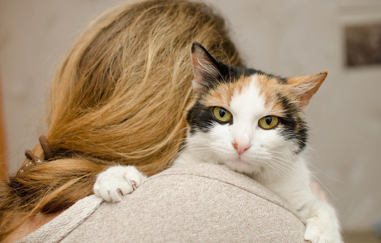 Фото обои кошка, девушка, фон, волосы, мордочка, боке