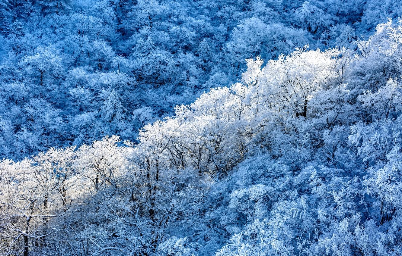 Фото обои зима, лес, снег, деревья, природа, мороз, вид сверху