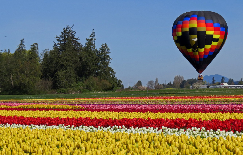 Фото обои поле, шар, тюльпаны