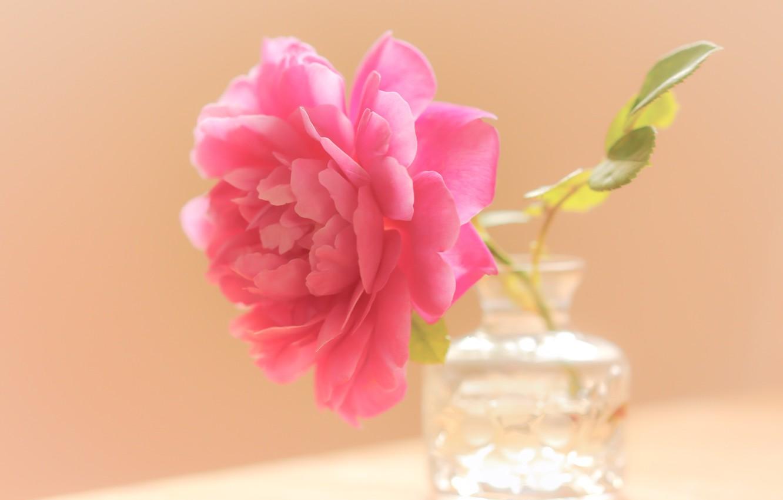 Фото обои цветок, фон, банка