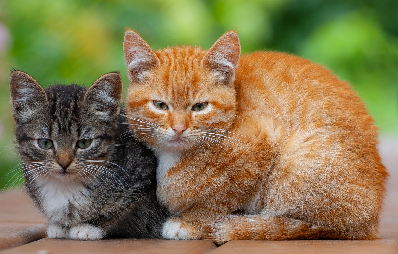 Два кота и котенок картинки
