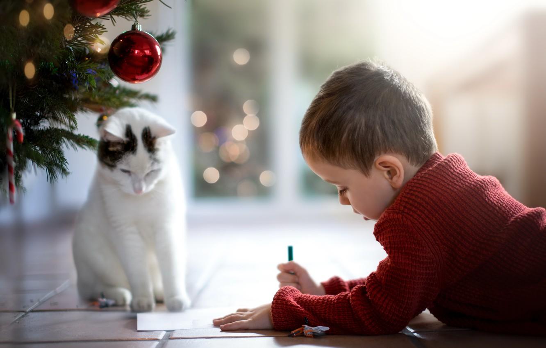 Фото обои кошка, мальчик, письмо деду морозу
