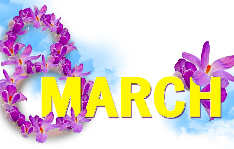 Фото обои крокусы, белый фон, 8 марта, женский день