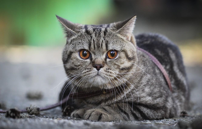 Фото обои кот, морда, фон